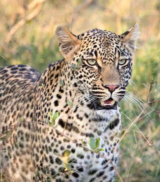 A leopard cannot change its spots