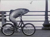fish-bicycle